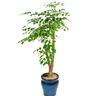 해피트리(행복나무)